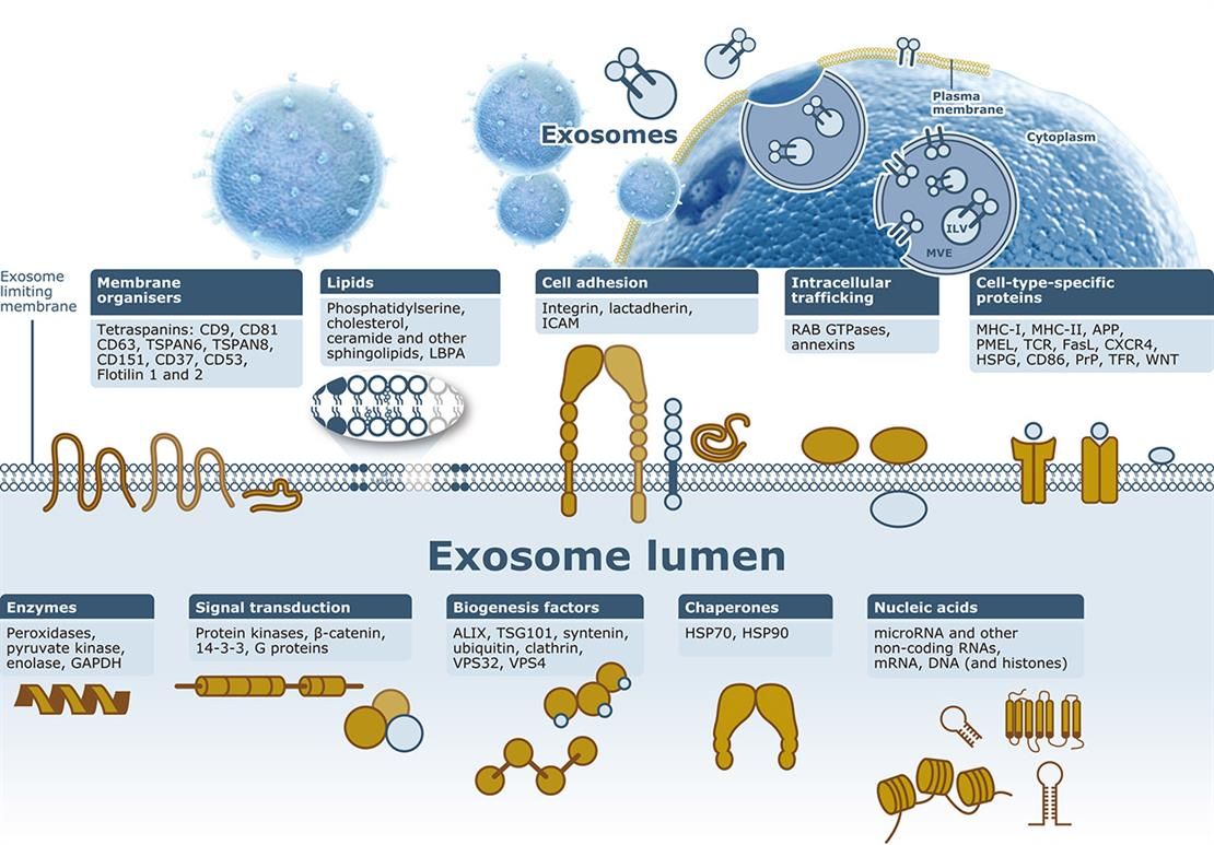 Exosome/Microvesicle Markers