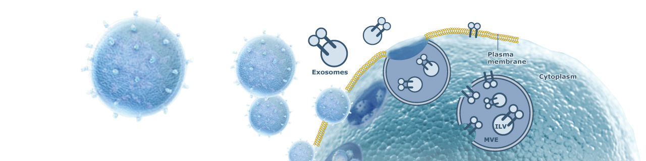 Article Alert: Improving cancer immunotherapy efficacy may depend on targeting exosomes bearing the immune checkpoint protein PD-L1