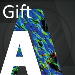 Free Bonus Gift A