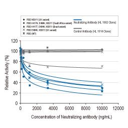 SARS-CoV-2 (COVID-19) Spike RBD antibody [HL1002]
