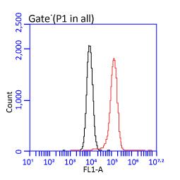 CD44 antibody [GT981] (GTX628472)