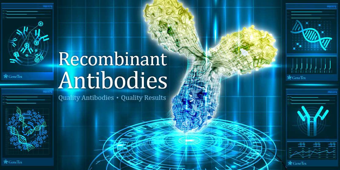 Recombinant Antibodies