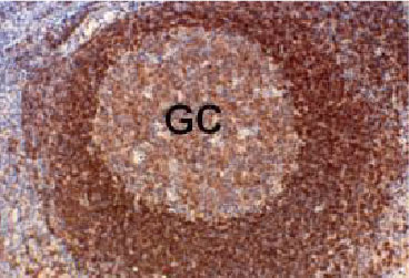 Hepatitis C Virus Core + NS3 + NS4 antibody