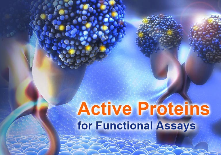 Active Proteins for Functional Assays