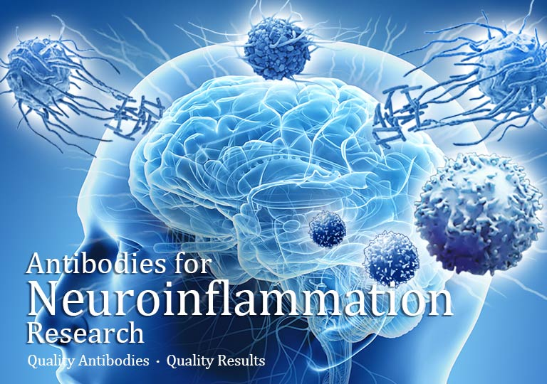 Antibodies for Neuroinflammation Research