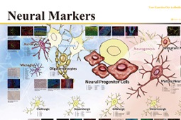 Neural Markers