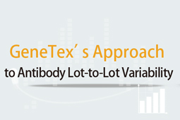 Approach to Antibody Lot-to-Lot Variability