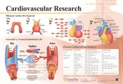 Cardiovascular Research poster