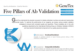 Five pillars validation