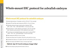 Protocol - IHC (whole-mount)