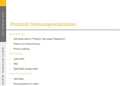 Protocol - Immunoprecipitation