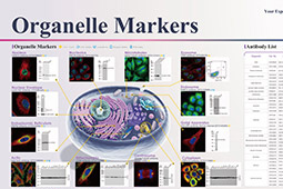 Organelle Markers