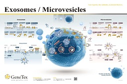 Poster - Exosome and Microvesicle Markers
