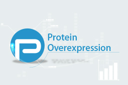 Overexpression Antibodies