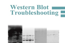 Pamphlet - Western Blot Troubleshooting