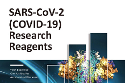 Pamphlet - SARS-CoV-2 (COVID-19) Research Reagents
