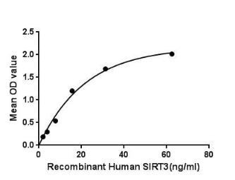 Human SIRT3 protein (active). GTX00190-pro