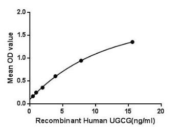 Human UGCG protein, His tag (active). GTX00280-pro