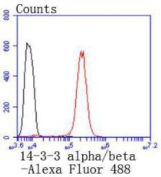Anti-14-3-3 alpha/beta antibody [SD0837] used in Flow cytometry (FACS). GTX00978