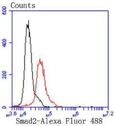 Anti-SMAD2 antibody [SP06-05] used in Flow cytometry (FACS). GTX01187