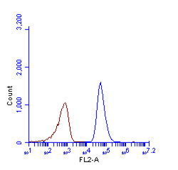 Anti-SQSTM1 / P62 antibody [N3C1], Internal used in Flow cytometry (FACS). GTX100685