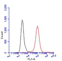 Anti-CD45 antibody used in Flow cytometry (FACS). GTX116018
