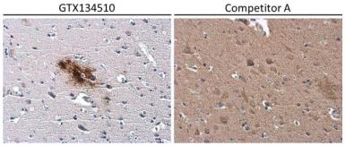 Anti-beta Amyloid (1-42) antibody – Conformation Specific used in IHC (Paraffin sections) (IHC-P). GTX134510