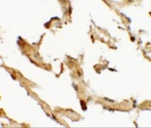 Anti-WDR18 antibody used in IHC (Paraffin sections) (IHC-P). GTX32071