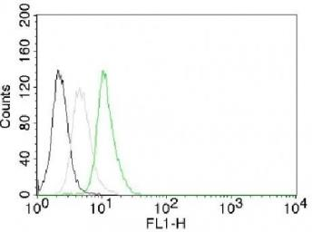 Anti-Cyclin D1 antibody [CCND1/809] used in Flow cytometry (FACS). GTX34617
