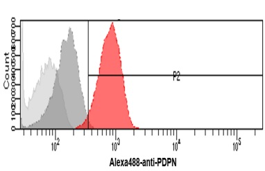 Anti-Podoplanin antibody [5E2] used in Flow cytometry (FACS). GTX50043