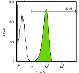 Anti-Oct4 antibody [GT486] used in Flow cytometry (FACS). GTX627419