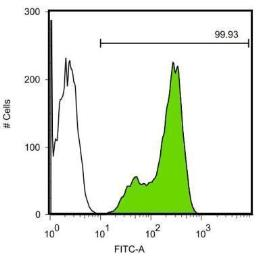 Anti-Nanog antibody [GT3312] used in Flow cytometry (FACS). GTX627421