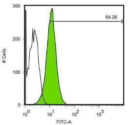 Anti-c-Myc antibody [GT168] used in Flow cytometry (FACS). GTX628459