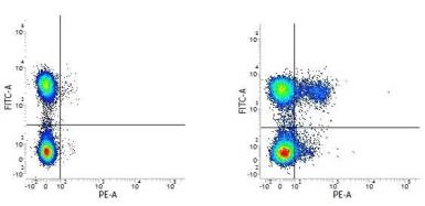 Anti-CCR5 antibody [HEK/1/85a] (PE) used in Flow cytometry (FACS). GTX75915
