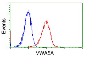 Anti-VWA5A antibody [3D6] used in Flow cytometry (FACS). GTX83424
