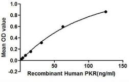 Human PKR protein (active). GTX00113-pro