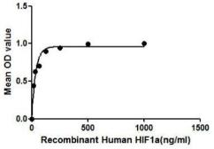 Human HIF1 alpha protein, His tag (active). GTX00119-pro