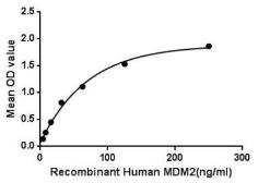 Human MDM2 protein (active). GTX00176-pro