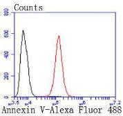 Anti-Annexin V antibody [JF50-11] used in Flow cytometry (FACS). GTX01056