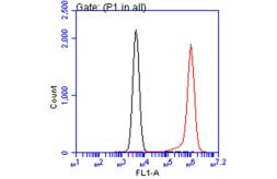 Anti-Annexin V antibody used in Flow cytometry (FACS). GTX103250