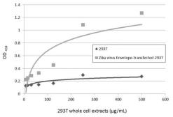 Anti-Zika virus Envelope protein antibody used in ELISA (ELISA). GTX133326