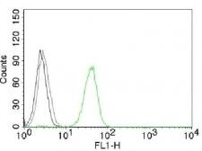 Anti-CD31 antibody [JC/70A] used in Flow cytometry (FACS). GTX34495