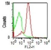Anti-CD43 antibody [DF-T1] used in Flow cytometry (FACS). GTX34513