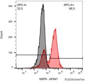 Anti-SARS-CoV / SARS-CoV-2 (COVID-19) NSP8 antibody [5A10] used in Flow cytometry (FACS). GTX632696